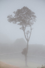 Lone Tree Amongst Fog (Andre Sousa Photography) Tags: mach trees outdoor lonetree landscape machupicchu explore nature earth mist outdoors fog ourplanet adventure wilderness thegreatoutdoors