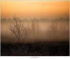 Before sunrise (nandOOnline) Tags: mist morning strabrecht koud sunrise december nature nevel landscape vorst zonsopkomst dauw natuur strabrechtseheide cold fog ochtend landschap frost mierlo nbrabant nederland