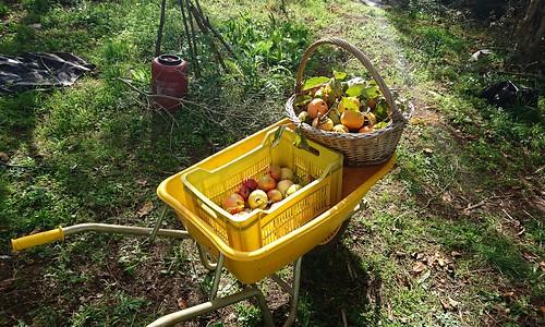 Carriola di frutta