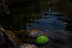 Art of Seeing (VisualsDiary) Tags: nature walk finest naturesfinest bhimkund rajasthan tripurasundari road lesstravel travel canon photography artofseeing harshshahphotography canon6d color