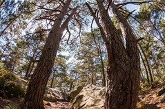 Fontainebleau, foret, 103 (Patrick.Raymond (3M views)) Tags: bois arbre foret hdr fisheye tokina 1017 nikon