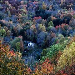 La casa del bosque 🍂