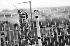 """""  (alogico) Tags: filosofia psicologia philosophy psychology psicoanalisi psychoanalysis cat gatto alogico abstract astratto art animal blackandwhite biancoenero letteratura literature realt reality"