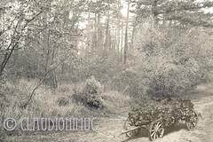 "Spoon River Anthology Mabel Osborne (claudionimuc) Tags: spoonriver edgarleemasters america selenio seppia crema poesia morti fernandapivano pivano antologia de andre"" pavesi 2016 art rural"