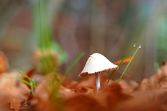 Automn reflection - *memories (ej - photographie) Tags: pilz pilze fungi mushrooms mushroom automn herbst olympus omd em5markii schweiz wald forest november bokeh schrfentiefe outdoor suisse svizzera switzerland nature natur flickrnature laub herbstfarben mzuiko macro makro flickr
