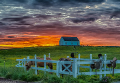 The horses in the midnight sun .. ... (Lassetjus photo) Tags: y2013 island norurlandeystra is iceland sunset midnightsun icelandic horses house