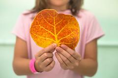 45/52 Hojas (Nathalie Le Bris) Tags: 7dwf hoja leaf feuille mano otoño fall hand