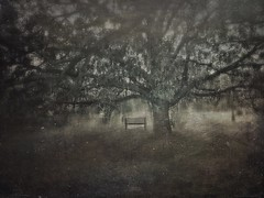 All Of Our Journeys Lead To Home 9 (michelle-robinson.com) Tags: michellerobinson michmutters fineartphotography monochrome blackandwhitephotography 4tografie flickrelite artphotography atmospheric photomanipulation photography adelaide southaustralia australia trees nature landscape iphone6plus shotoniphone editedonipadair2