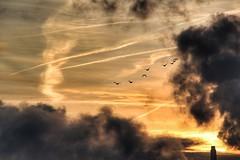 In den Sonnenuntergang. (marfis75) Tags: rhein wolken clouds wolkig tag sunrise rise sun vgel ducks duck enten gnse gans fliegen fly rauchig neblig fog marfis75 wiesbaden eltville rhine fluss romantik farben romantic draussen wetter fine colours herbst kalt luft river