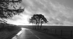 On the Road again! (Elisafox22) Tags: elisafox22 sony rx100 fencedfriday road dawn sky rain rainy clouds fencefriday hff fences aberdeenshire landscape outdoors scotland trees fields claedinianpines fence gate wooden monochrome blackandwhite monotone shadows bw mono greyscale outdoor elisaliddell©2016 daarklands