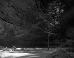 Tree & Light (Alex Luyckx) Tags: statepark park ohio bw film nature water landscape blackwhite natural ilfordhp5 oh 4x5 hp5 nationalparkservice ilford largeformat hockinghills asa200 graflex crowngraphic ashcave filmphotography stateforest hockinghillsstatepark filmisnotdead epsonv700 pyrocathd pacemakercrowngraphic photographersformulary pentaxspotmeterv beliveinfilm fujifujinonw156125