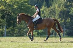 DSC05415_s (AndiP66) Tags: springen dubenmoos solothurn derby 2014 august pferd horse schweiz switzerland kantonsolothurn cantonsolothurn concours wettbewerb horsejumping springreiten pferdespringen samstag saturday 22august2015 2015 cantonofsolothurn contest equestrian sports pferdesport sport sony sonyalpha 77markii 77ii 77m2 a77ii alpha ilca77m2 slta77ii sony70400mm f456 sony70400mmf456gssmii sal70400g2 andreaspeters biberist ch