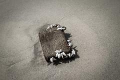 Auswahl-5404 (wolfgangp_vienna) Tags: old beach strand thailand island asia asien alt insel ko flotsam trat kut treibgut kood aophrao kokood schwemmgut kokut kohkut thesunshineresort