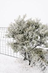 (a-e-m-e) Tags: winter white snow plant cold tree snowflakes nikon outdoor tasmania snowing blizzard nikond600 vsco vscofilm