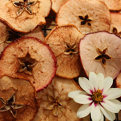 Red Delish (schnookable) Tags: food fall apple yum chip zinnia