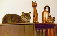 imm019 (d_fust) Tags: cat kitten gato katze 猫 macska gatto fust kedi 貓 anak katt gatito kissa kätzchen gattino kucing 小貓 고양이 katje кот γάτα γατάκι แมว yavrusu 仔猫 का बिल्ली बच्चा