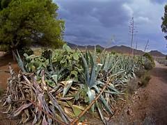 El borde del camino (AAcero) Tags: almeria cabodegata genoveses