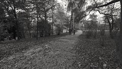 2015-11-12_07-39-28 (wiktor_furmaniak) Tags: park trip autumn people bike landscape blackwhite sony wideangle route 10mm samyang bwnature passionphotography naturecollection naturecomposition absolutelyperrrfect bwlover alpha65