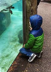 catherinesmith_19_zoo (catherineLsmith) Tags: blue columbus ohio green water rain kneel zoo penguin kid tank unitedstates coat