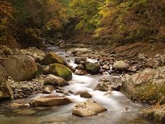 Nishizawa ravine (elminium) Tags: mountain water japan forest stream ravine yamanashi coloredleaves dmcg1