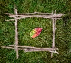 'Fallen Chemistry' (candicemorganphotography) Tags: autumn blur colour fall grass leaf twigs sonyalpha850 candicemorgan
