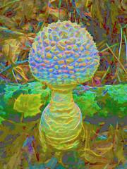 Then, Alice found the mushroom (Dave Marcus, Photography & Digital Art) Tags: arabia