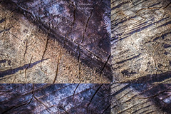 Angles on the Stump (PhotoArtMarie) Tags: wood brown beige purple angles diagonal stump