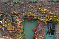 Vines (Alexandra Keathley) Tags: door old blue autumn flower building fall window leaves vines doors indiana storefront warsaw boxes