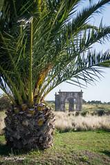 Pont Flavien (Patrice Faur) Tags: minolta sony paca provence 13 palmier patrimoine bouchesdurhne stchamas pontflavien minoltamdlenses minoltamdzoom3570mm135 sonya57 objectifargentique