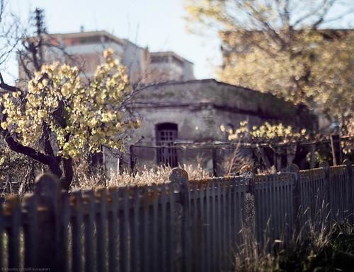 decadent garden
