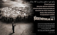 Kerim Kuran Yasin 72-73 (Oku Rabbinin Adiyla) Tags: people nature animals book heaven god quote farm muslim religion pray holy bible genesis allah quran verse kuran ayet