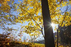 Autumn light at Hohenstein N°2 (Bernhard_Thum) Tags: autumn nature franken hohenstein nationalgeographic thum leicam elitephotography landscapesdreams alemdagqualityonlyclub capturenature distagont1435 bernhardthum distagon3514zm