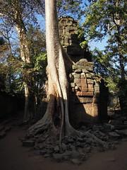 DSCN2316 (albyantoniazzi) Tags: voyage travel architecture cambodia angkorwat temples siemreap archeology kampuchea cambogia