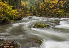 Fall stream (jeff's pixels) Tags: nisqually river mount rainer national forest stream creek longexposure nikon d750 nature fall autumn beauty