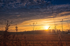 Sunrise on the autumn fields (k009034) Tags: 500px woods copy space finland matkaniva oulainen tranquil scene agriculture autumn clouds communication countryside fields forest morning nature no people plants rural sky sun sunrise telephone line teamcanon copyspace tranquilscene nopeople telephoneline