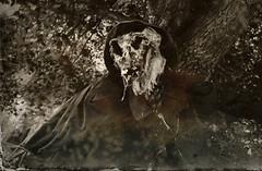 Dark Dreams (drei88) Tags: scarecrow terror halloween fear dead death spirit haunted spooky creepy disturbing shock fright d7k d7000