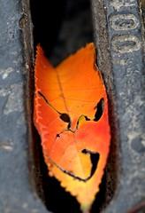 fast emellan. (ros-marie) Tags: fs161030 emellan fotosondag leaf