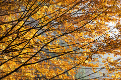 20161030-WOL_7721.jpg (viennalinux) Tags: spaziergang nebel herbst nature tauern fog natur ossiach ossiacher
