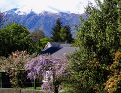Arrowtown. Snow on the mountains and wisteria flowering. (denisbin) Tags: arrowtown queenstown wisteria shotoverriver southernalps newzealand presbyterian church otago mainstreet shoops