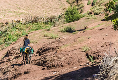 Home From The Fields (Aimless Alliterations) Tags: atlasmountains morocco nikkor80200mm nikond80 alhaouz berber farmer donkey village mahgreb