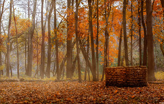 Well (patkelley3) Tags: autumn fall well forest orange fog