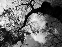 IMG_8824_RCP_Sky&Tree_b&w (Stephenie DeKouadio) Tags: canon photography outdoor washington washingtondc dc dcphotos autumn blackandwhite monochrome rockcreekpark tree trees silhouette sky clouds branches nature beauty