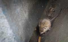 Living On The Streets (DobingDesign) Tags: mouse rodent london londonmouse nook concrete hidden cranny hiding sweet cute furry streetphotography street litter livinginthedirt dirty dirt lonely sad afraid scavenging hungry tiny secret animal texture surface manmade depthoffield