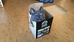 Waylon in a very small box. (slash521) Tags: waylon cat feline felissilvestriscatus domesticcat kitty crazycat explore explored