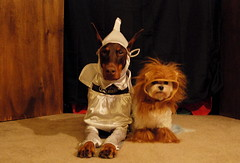 Wizard of Oz (samd517) Tags: halloween costume 2016 leash free living crag bourbon rugby tin man lion dorothy scarecrow wizard oz