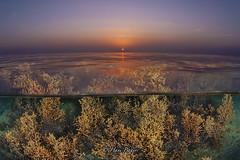 Aljazair Beach (HANI BADER) Tags: aljazair beach underwater hani bader nikond7000 nikon105mm nikon bahrain sea seasea seaseaysd2 diving
