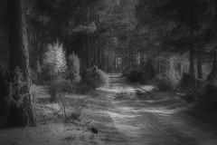 *** (pszcz9) Tags: polska poland przyroda nature natura las forest forestimages droga road wiosna spring pejza landscape biebrzaski parknarodowy nationalpark beautifulearth bw blackandwhite monochrome czarnobiae