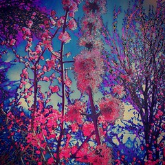 IMG_3766 (sosparkly) Tags: instagram nature trees plants paris england edinburgh florida bermuda beach whimsy