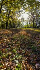 DSC_7452_stitch (sergeysemendyaev) Tags: 2016 russia krasnodar autumn fall     landscape scenery    sunset dusk sun  trees