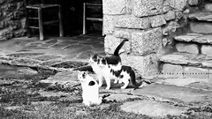 οι κουτσομπόλες/bw (Love me tender ♪¸.•*´¨´¨*•.♪¸.•*´) Tags: dimitrakirgiannaki photography greece greek cats animals 2016 nikond3100 leonidio arkadia stairs stones xenonashotel november travel γατεσ ζωα λεωνιδιο αρκαδια ξενοδοχειοξενωνασ ταξιδι ελλαδα